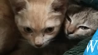 Mother Cat and kitten went inside the sack
