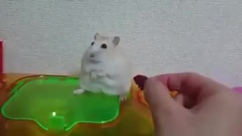 I have the most sensitive hamster in the world!