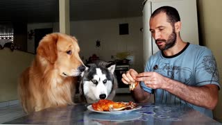Dogs Tested with Chicken