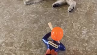 Cat Play With Toys