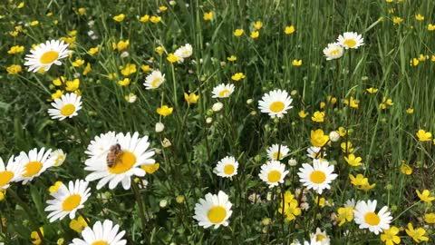 Bee's Microcosmos