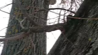Man Rescues Kitten from Tree with Rake