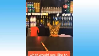 funny cat - your daily dose of funny pets video