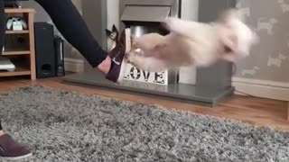 Lovely Puppy Dance - So Talented !