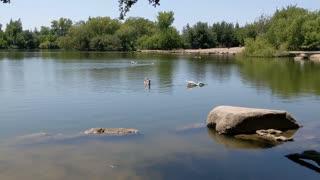 Beautiful bird floating in the lake