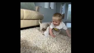 Children playing with cute dogs