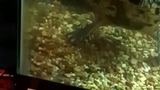 Feeding Raphael