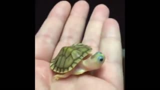 Very cute green turtle