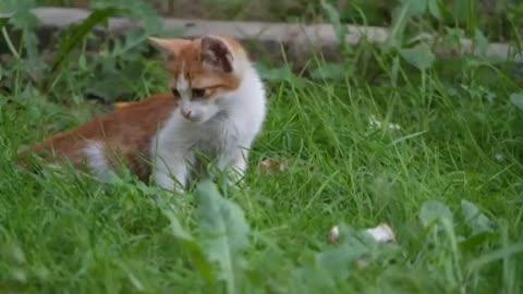 Cute cat sits in green grass