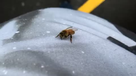 Bee in the car