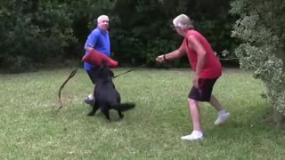 How To Make Dog Become Very Aggressive With Few Easy Tips