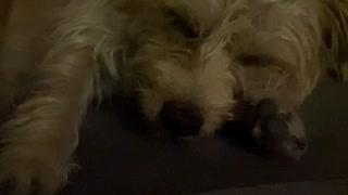 cute dog sleeping in my car
