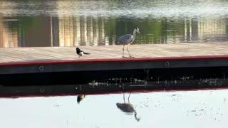 The crane caught a fish