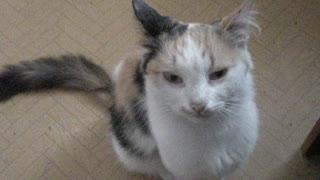 Puma-I am my beautiful cat!