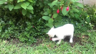 The cat plays with flowers.
