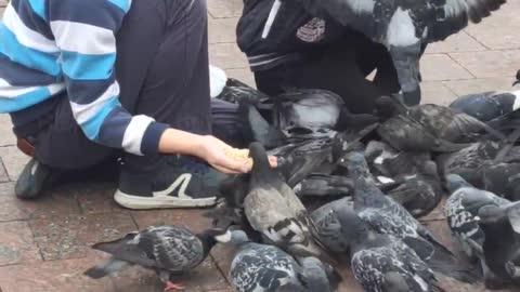 children feed pigeons