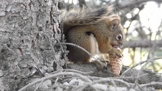 Look at this smart squirrel !! 😨