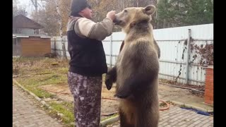 Bear Loves Berries