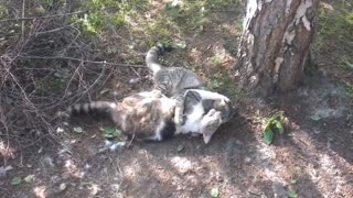 ULTIMATE CAT FIGHTS