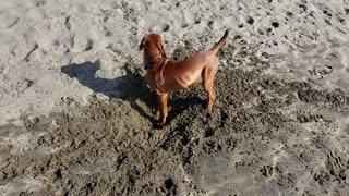 Cute Puppy First Trip to the Beach