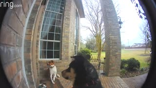 Doggy Door Bell..funny