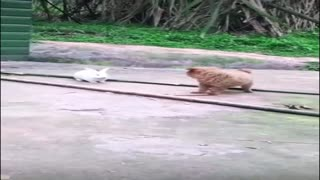 Cute, bunny playing with little dog