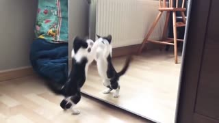 Funny Cat And mirror Video Funny video😂😂😂