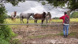 Horses unedited