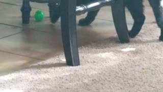 Cat chasing a ball