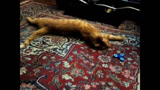 3 Legged Cat Playing Fidget Spinner