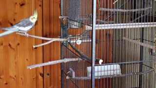 Cute Parrot and fun