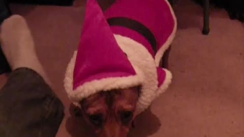 Funny Embarrassed Dog Merry Christmas 2020 from Babie the Terrier Cross
