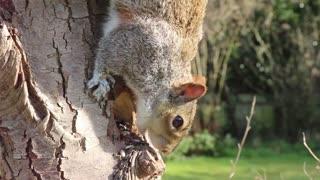 cute squirrel eating food