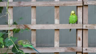 Beautiful lovebirds play on wood with beautiful colors