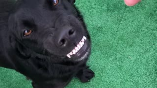 Happy Dog Shows Her Smile