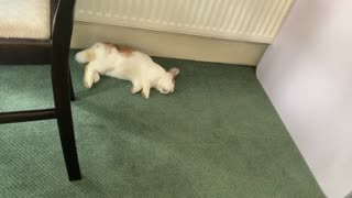 Cute Sleeping Young Rabbit