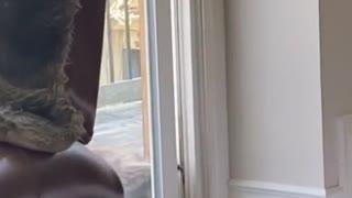 Raccoon Tries to Squeeze into Sliding Door
