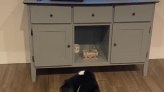 Pooch Gets Protective About Her Shows