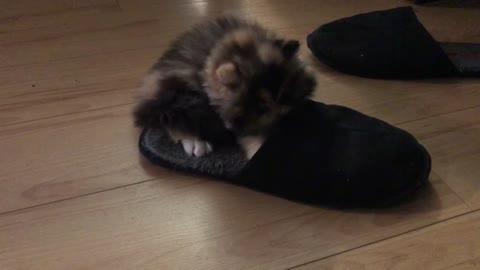 kitten in the sleeper!