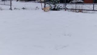 Puppy Running in Snow Part 2