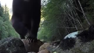 Check out those bear paws