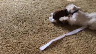 Tucker Playing