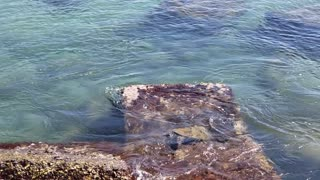 Sea Turtle Swimming 3