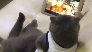 Cat chilling and watching a movie.