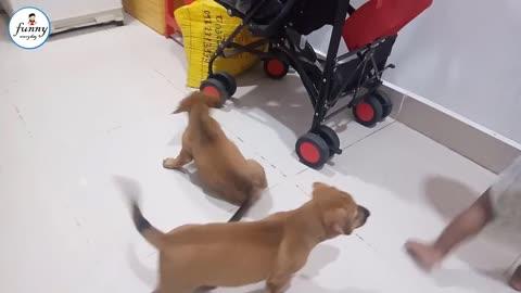 Funny cachorro 2