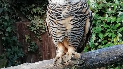 AMAZING OWL 🦉🤗WHAT HUGE EYES 👀!!