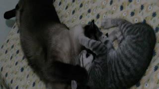 Amistad de gatos. Cats friendship