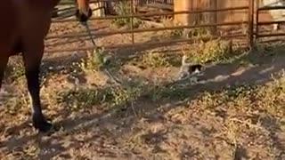 dog walking a horse on its leash
