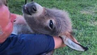 Man Cuddling and Singing to Adorable Donkey