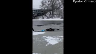 Rescuing a Dog from Cold Waters
